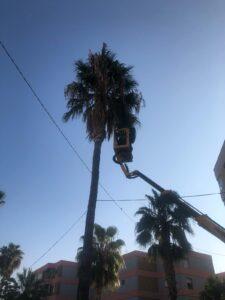 Inicio de trabajos de limpieza de palmeras